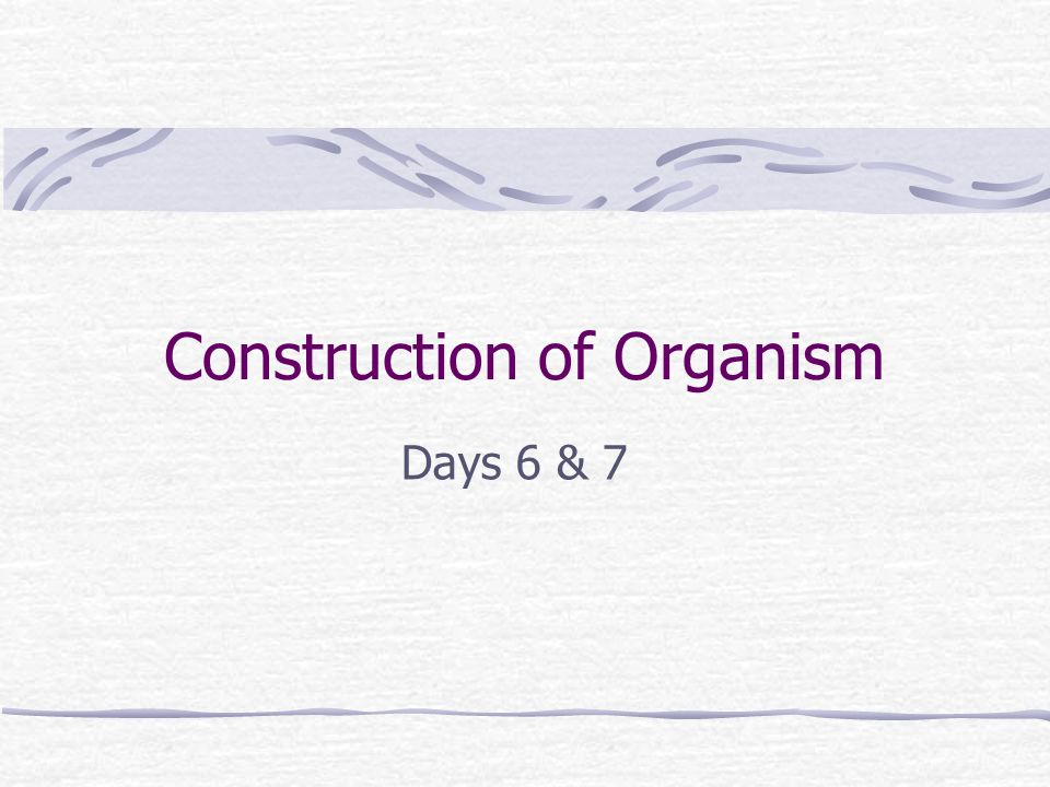 Construction of Organism