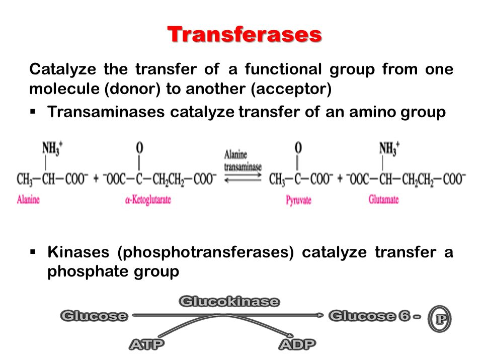 Transferases Catalyze the transfer of a functional group from one molecule (donor) to another (acceptor)