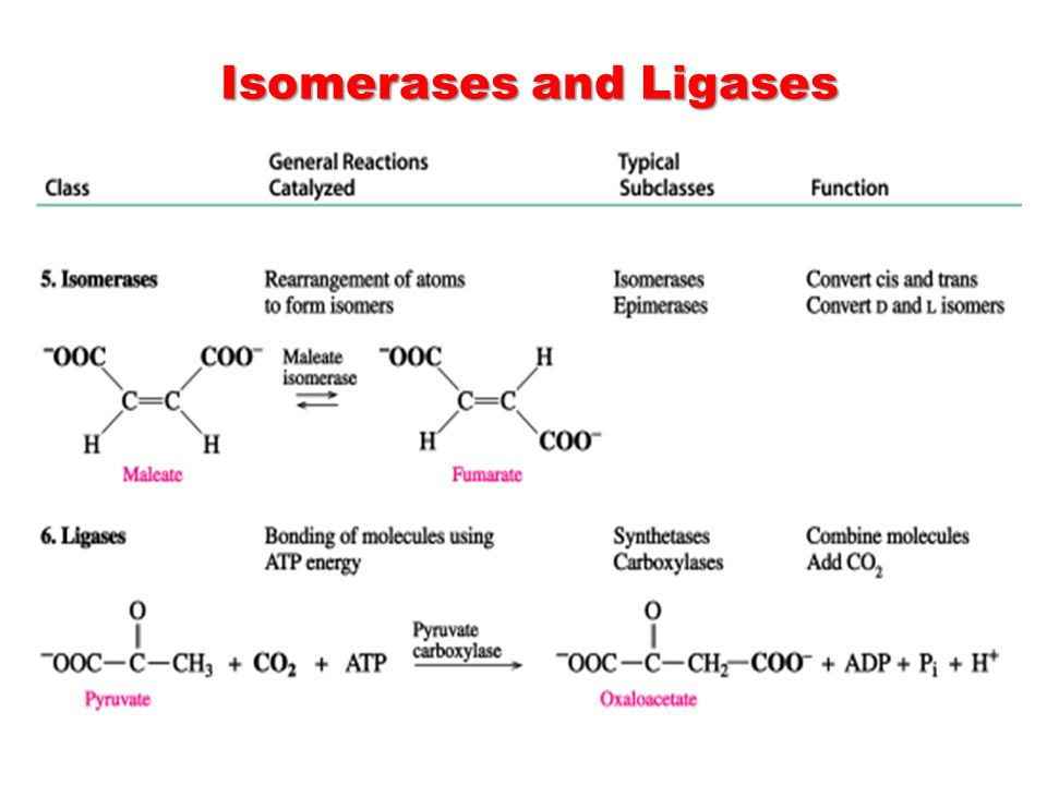 Isomerases and Ligases