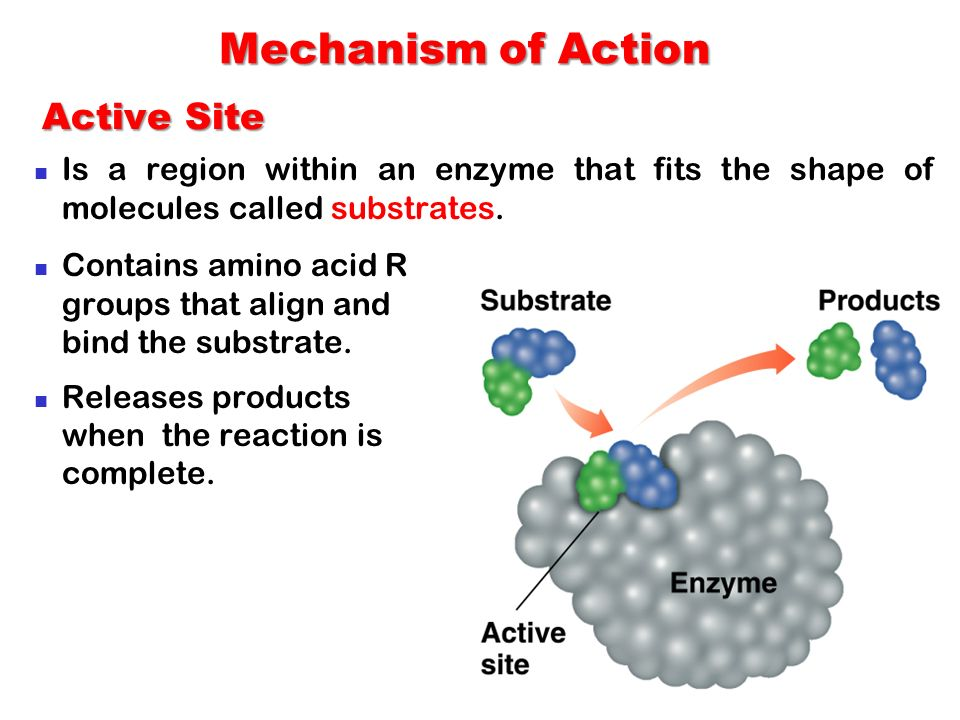 Mechanism of Action Active Site