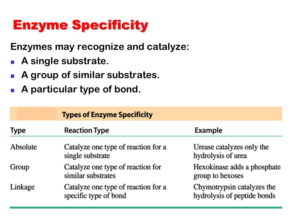 Enzyme Specificity Enzymes may recognize and catalyze: