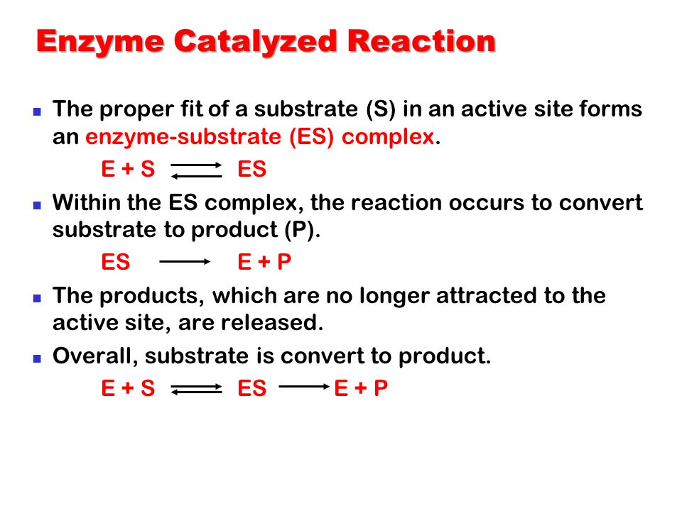 Enzyme Catalyzed Reaction