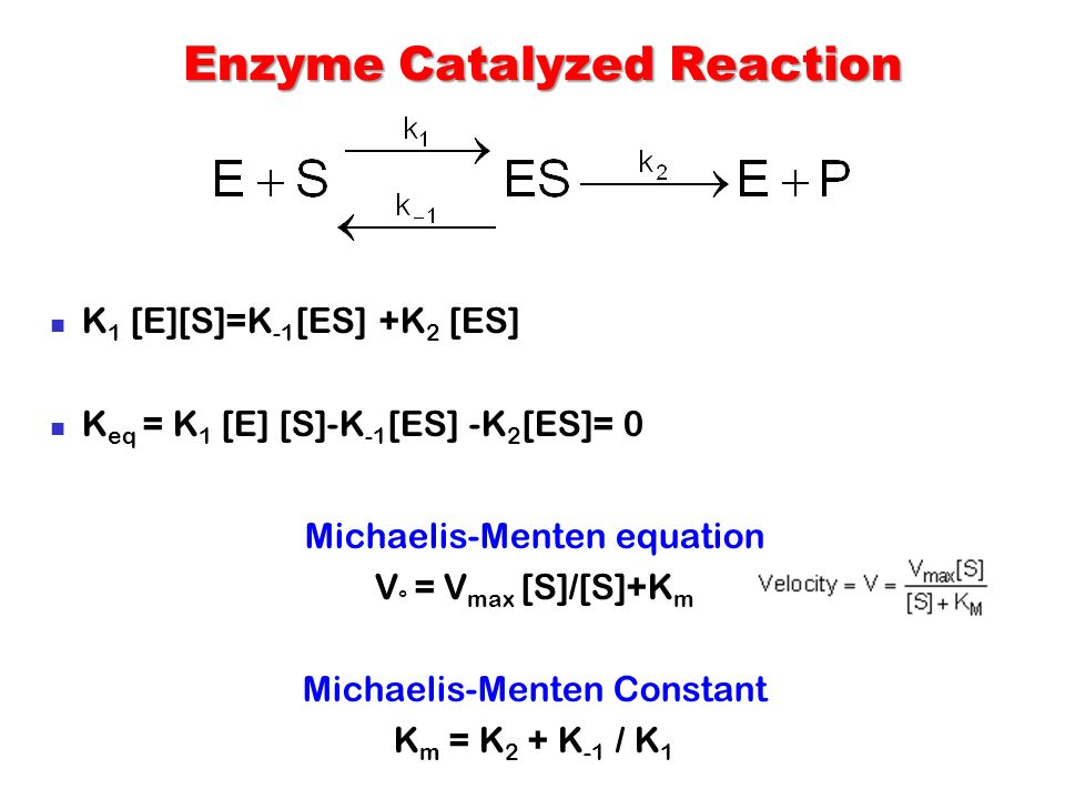 enzyme and catalyst relationship