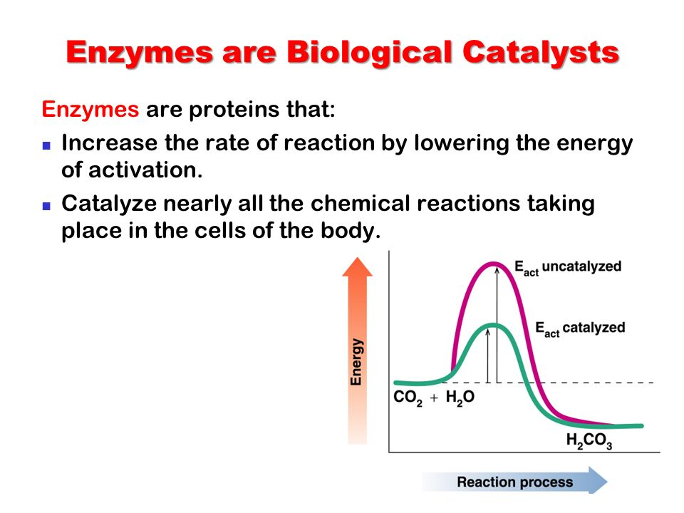 biology write up reaction of enzyme catalase Write a hypothesis for this converted to water and oxygen by the enzyme catalase could speed up the reaction as the amount of enzyme is.