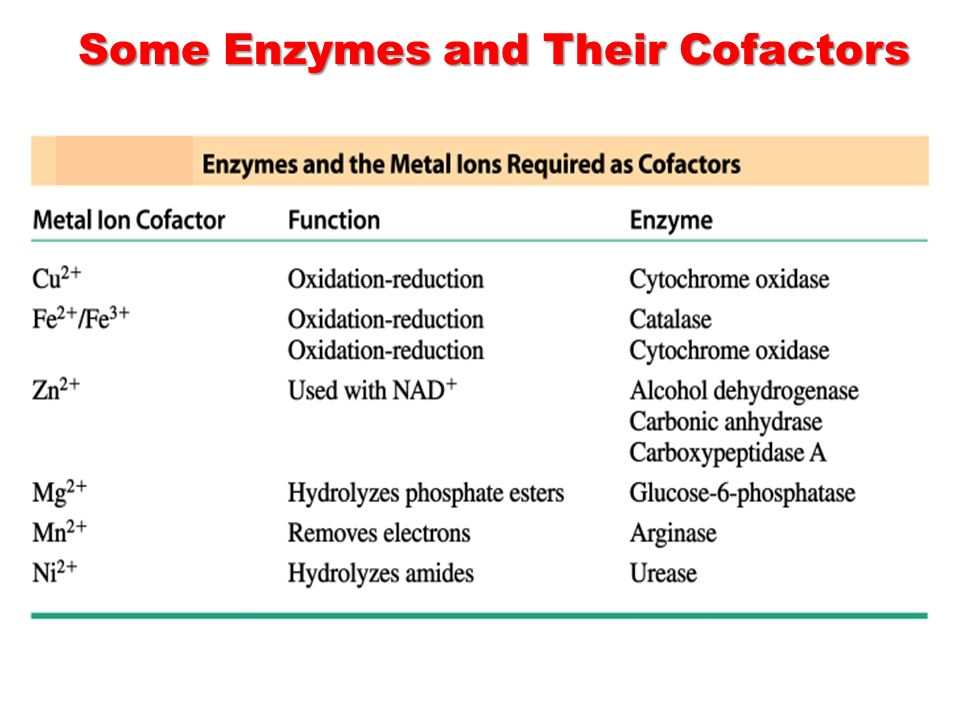 Some Enzymes and Their Cofactors