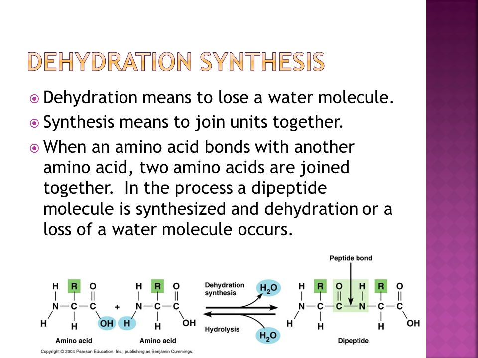 example of dehydration synthesis This video provides a brief description of dna nucleotide structure and the process by which they can be connected to form larger dna molecules.