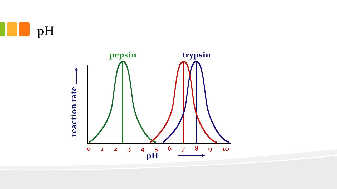 effect of ph on trypsin coursework Effect of ph on trypsin coursework practical 3: digestive enzymes, specificity and  ph • to illustrate the different substrate specificities of trypsin and chymotrypsin.