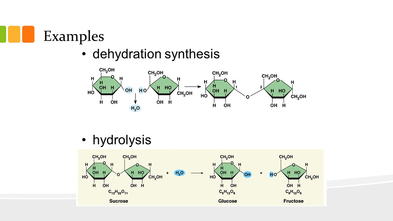 Dehydration Synthesis Example Metabolism. - ppt vide...