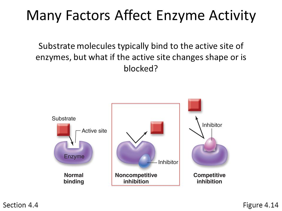 enzyme controlled reaction factors affect chemical structu Measure the effects of changes in temperature, ph, and enzyme concentration on reaction rates of an enzyme catalyzed reaction in a controlled experiment explain how environmental factors affect the rate of enzyme-catalyzed reactions.
