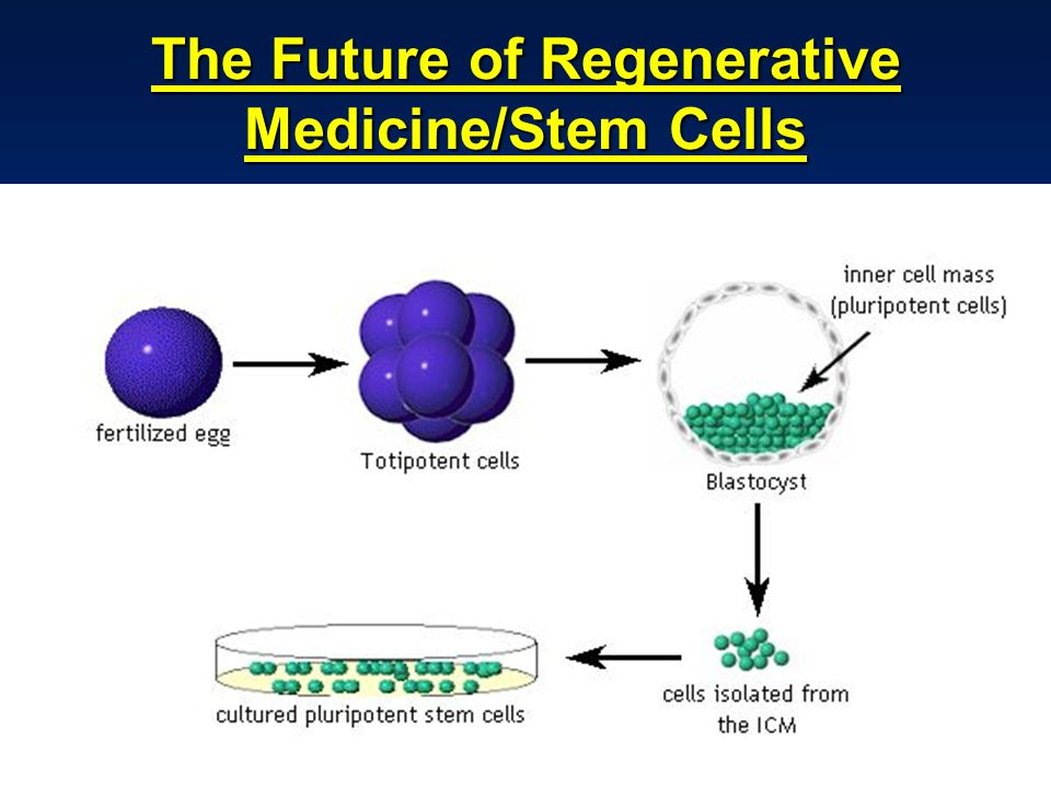 The Future of Regenerative Medicine/Stem Cells