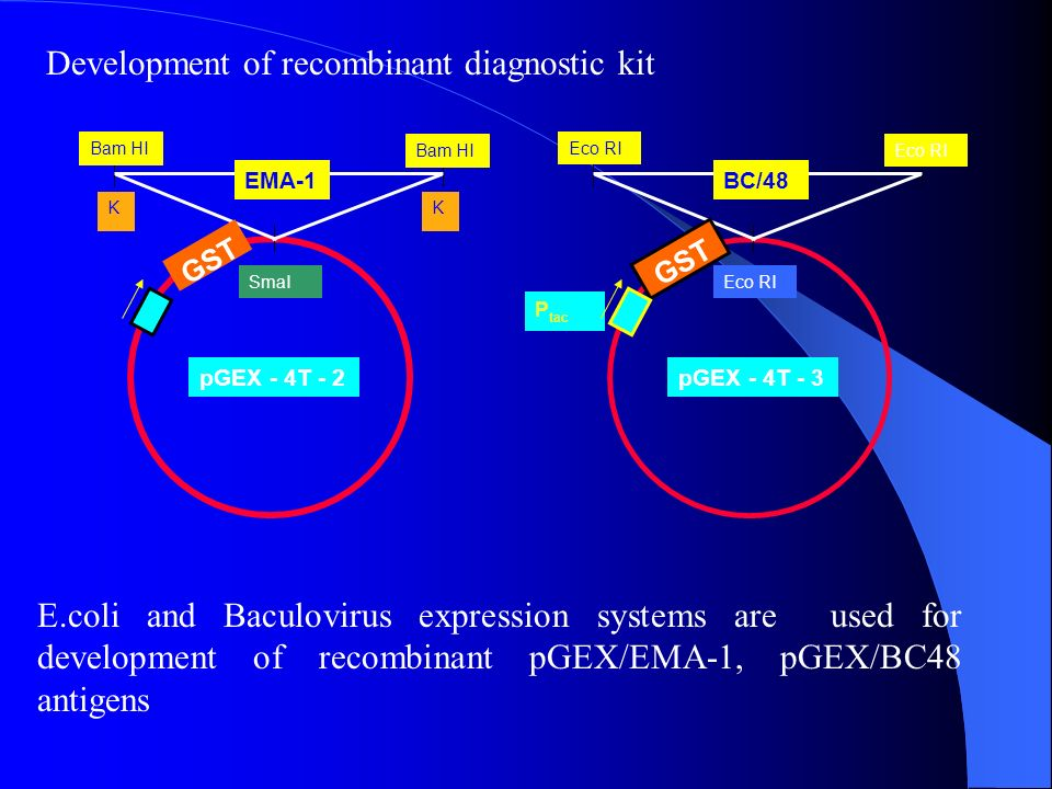 Development of recombinant diagnostic kit