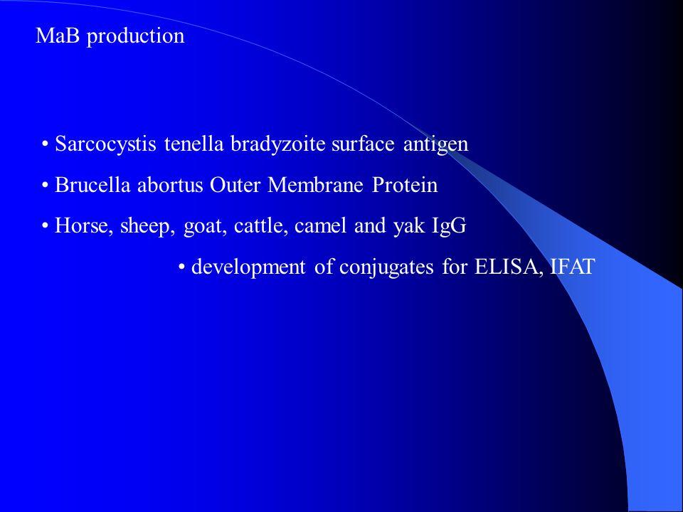 MaB production Sarcocystis tenella bradyzoite surface antigen. Brucella abortus Outer Membrane Protein.