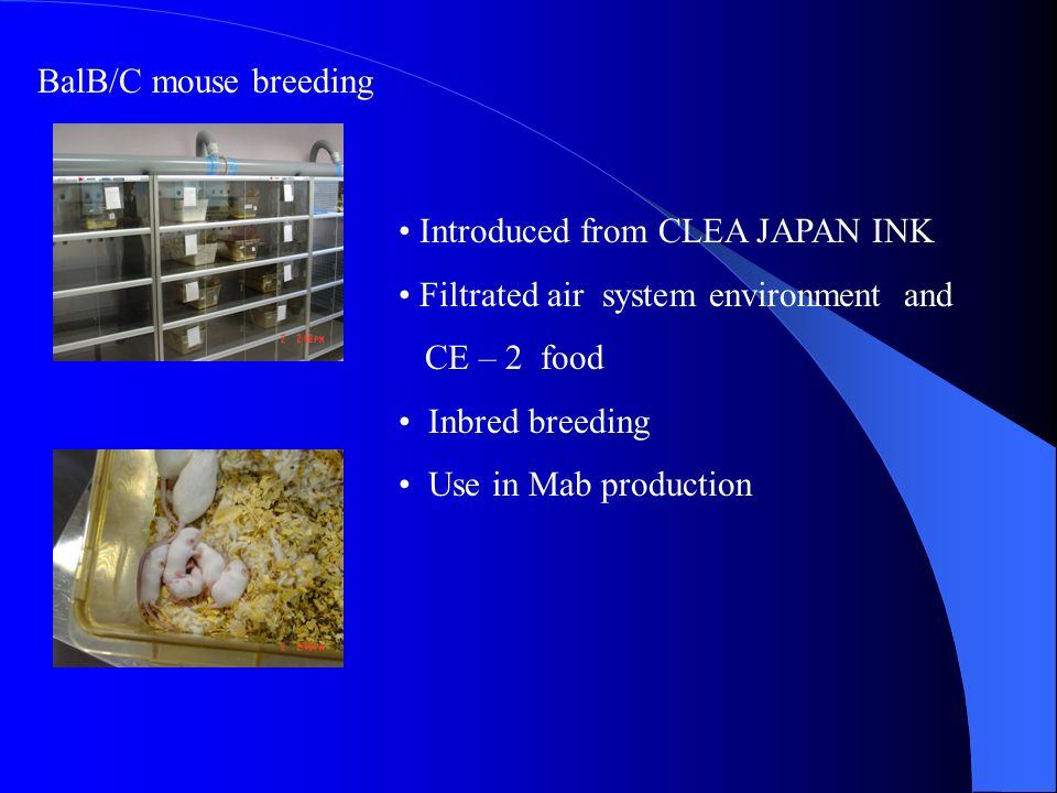 BalB/C mouse breeding Introduced from CLEA JAPAN INK. Filtrated air system environment and. CE – 2 food.