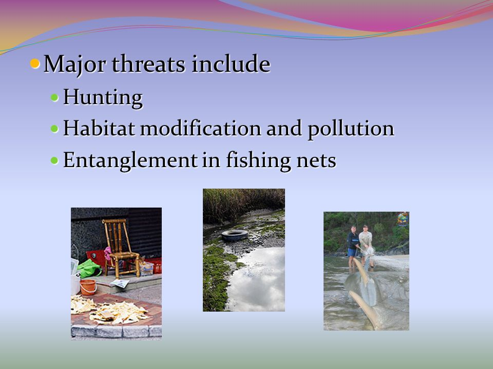 Major threats include Hunting Habitat modification and pollution