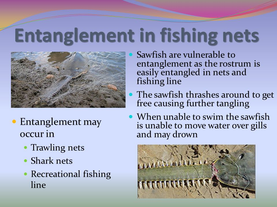 Entanglement in fishing nets