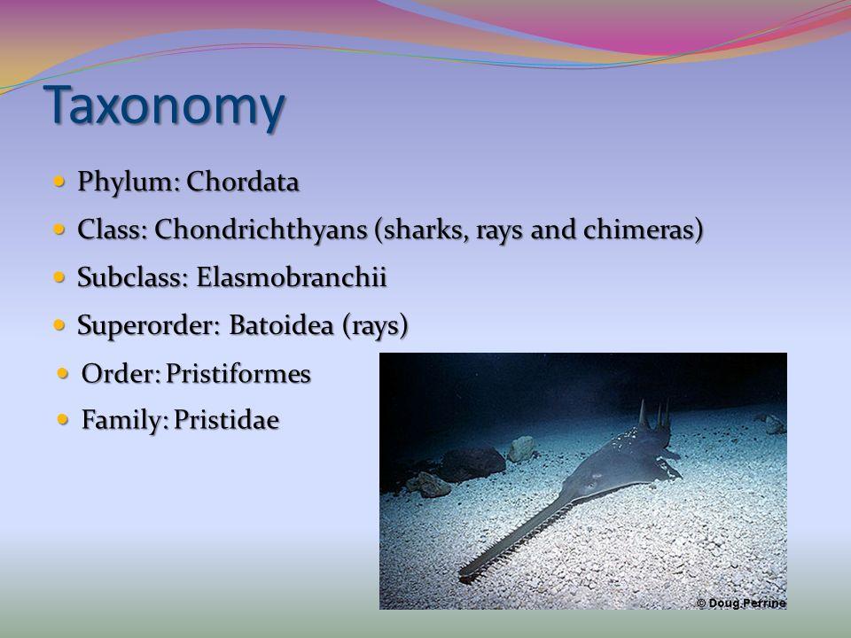 Taxonomy Phylum: Chordata