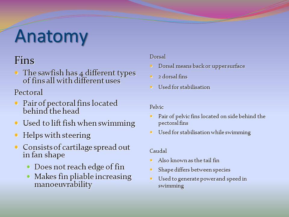 Anatomy Dorsal. Dorsal means back or upper surface. 2 dorsal fins. Used for stabilisation. Pelvic.