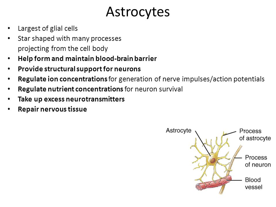 Lecture #20 Nervous System. - ppt download