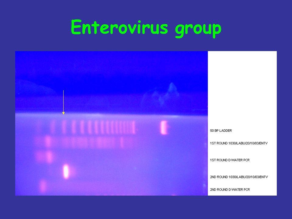 Enterovirus group