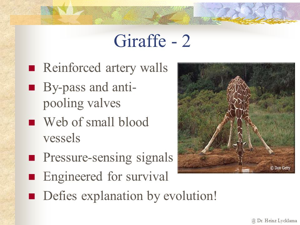 Giraffe - 2 Reinforced artery walls By-pass and anti- pooling valves