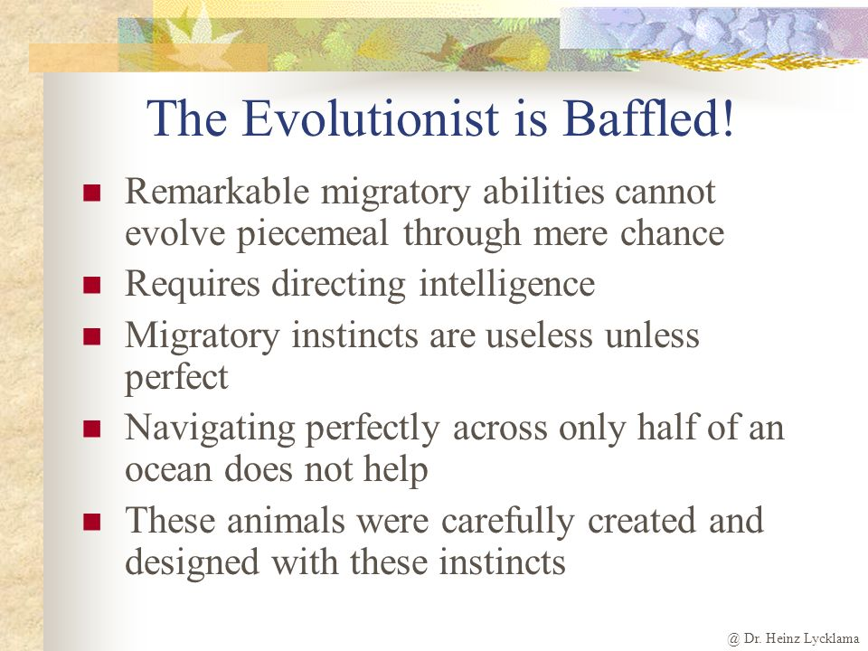 The Evolutionist is Baffled!