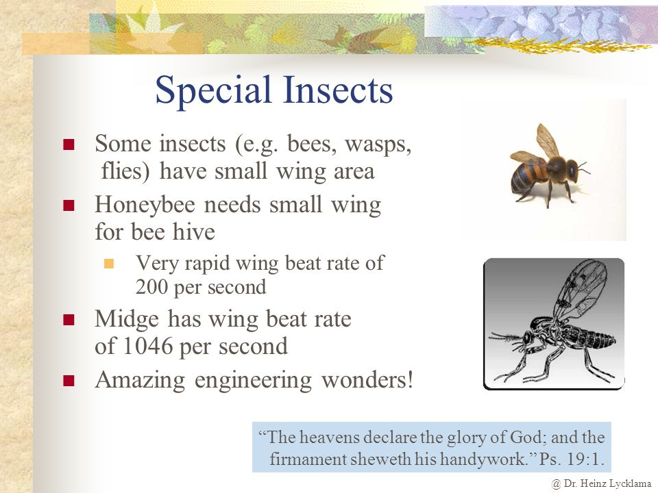 Special Insects Some insects (e.g. bees, wasps, flies) have small wing area. Honeybee needs small wing for bee hive.