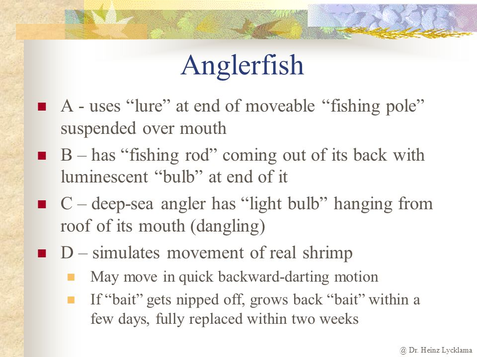 Anglerfish A - uses lure at end of moveable fishing pole suspended over mouth.