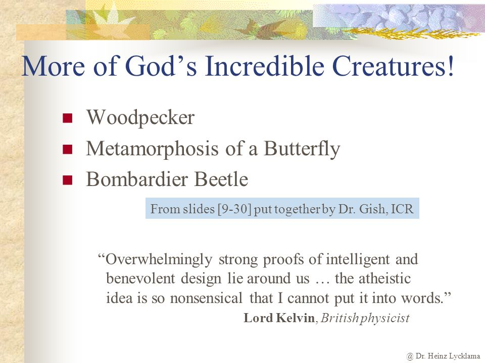 More of God's Incredible Creatures!