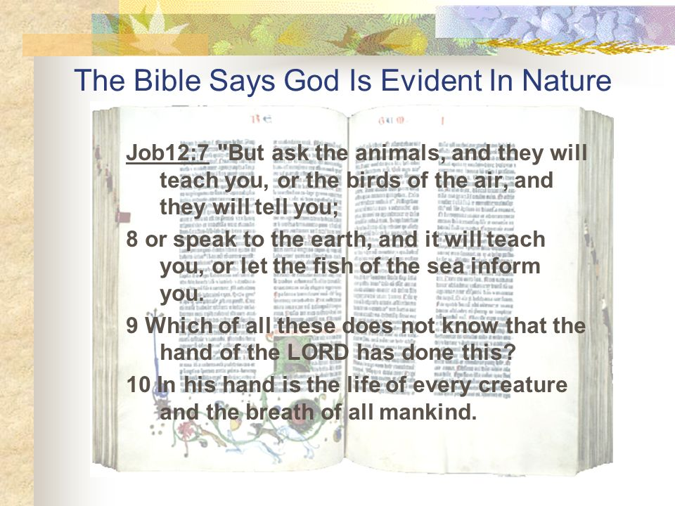 The Bible Says God Is Evident In Nature
