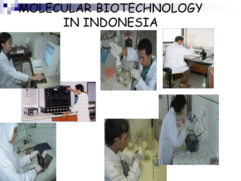 MOLECULAR BIOTECHNOLOGY IN INDONESIA