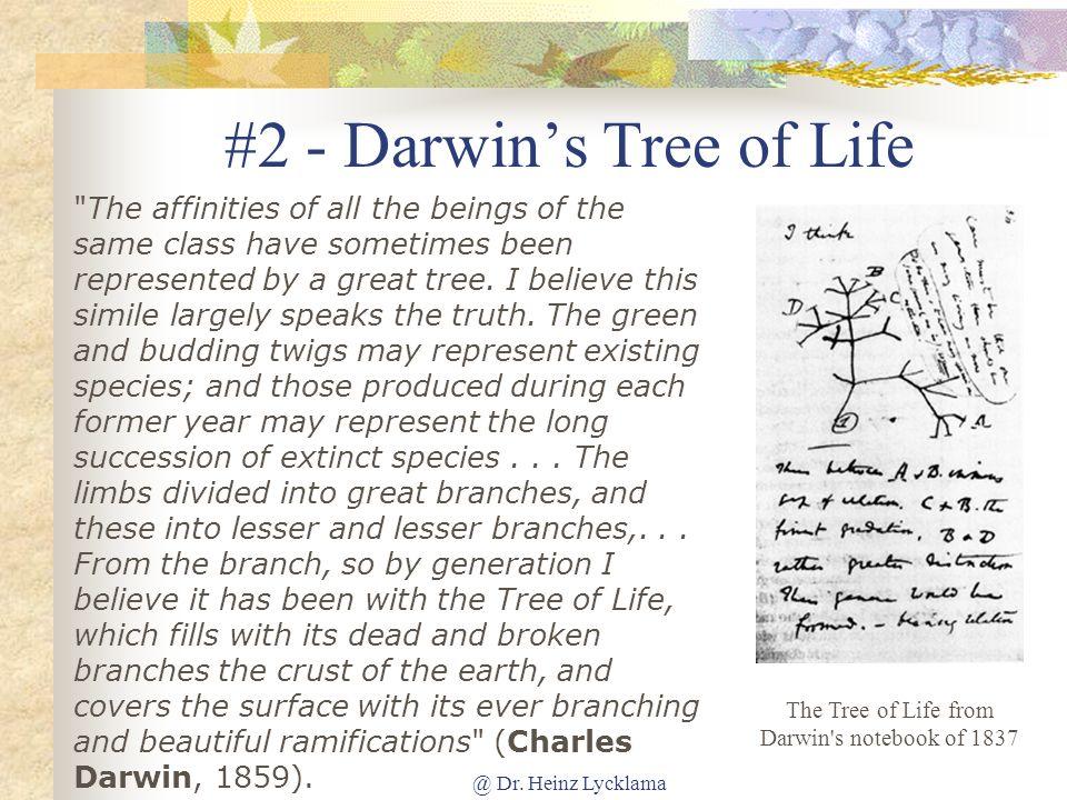 #2 - Darwin's Tree of Life