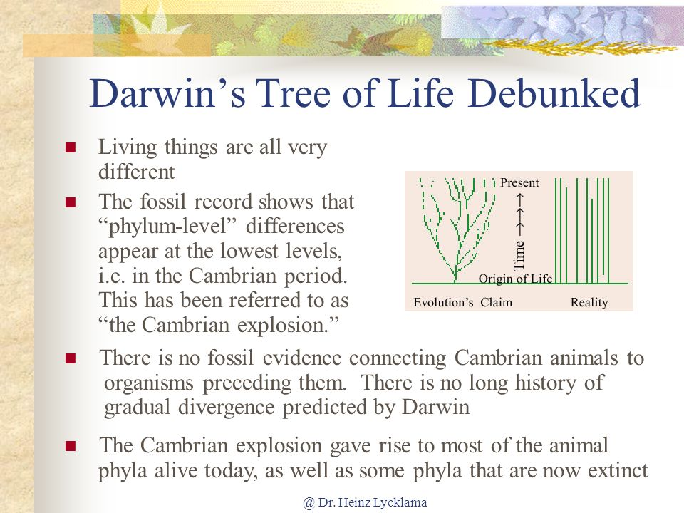 Darwin's Tree of Life Debunked