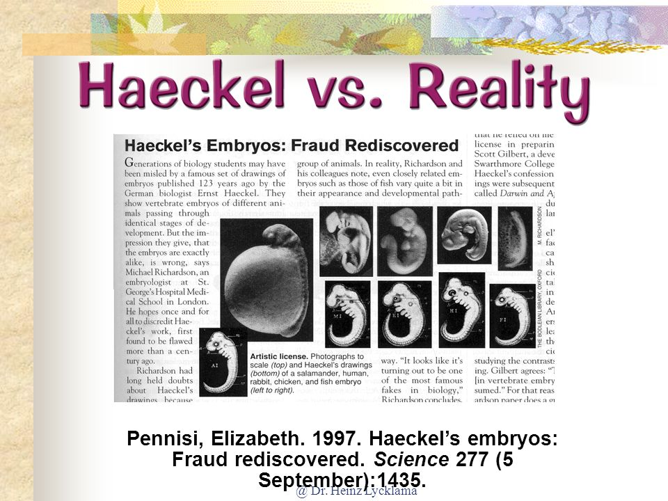 Haeckel vs. Reality Pennisi, Elizabeth. 1977. Haeckel's embryos: fraud rediscovered. Science 277 (5 September):1435.