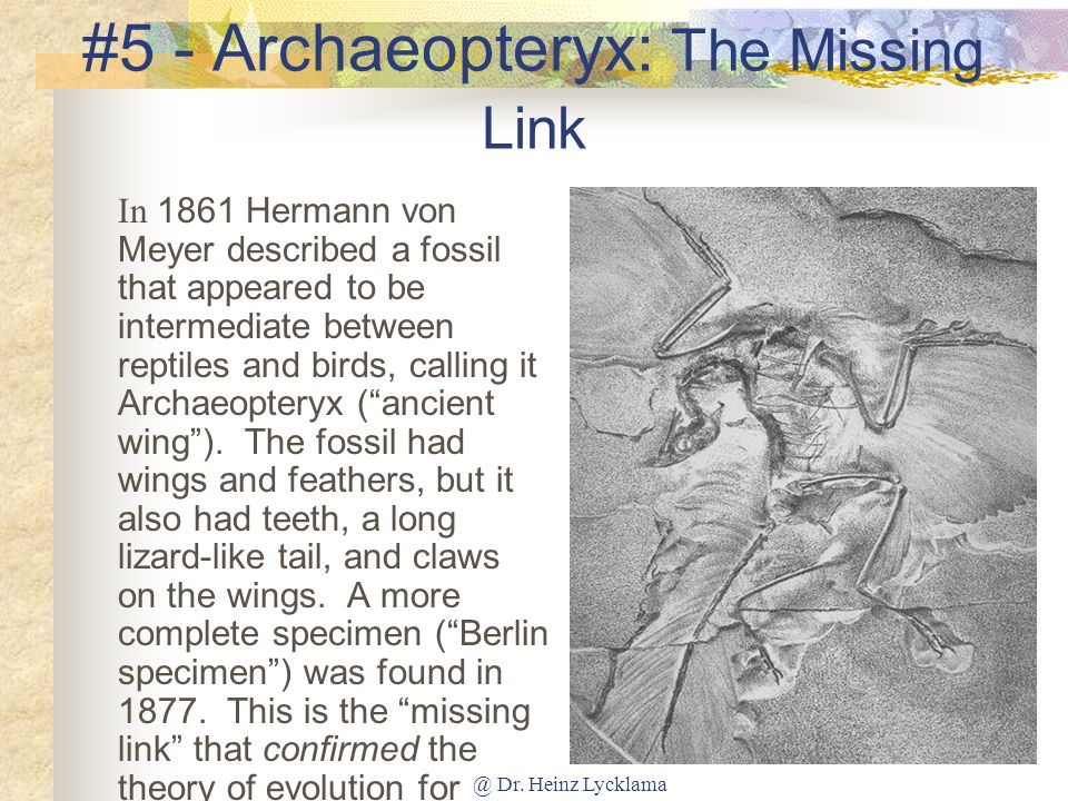 #5 - Archaeopteryx: The Missing Link