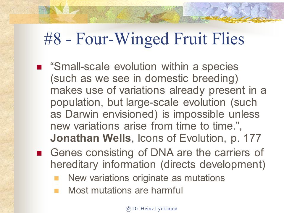 #8 - Four-Winged Fruit Flies