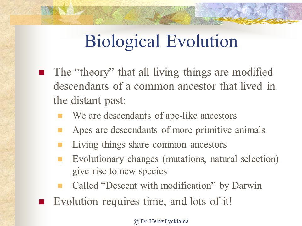 Biological Evolution The theory that all living things are modified descendants of a common ancestor that lived in the distant past: