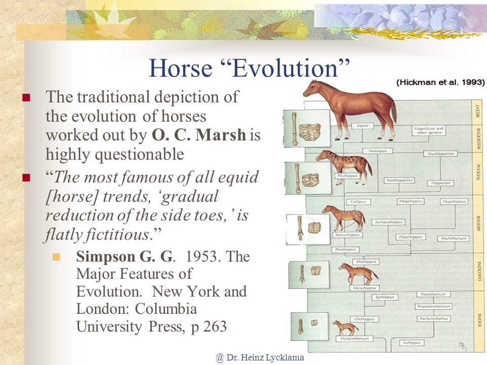 Horse Evolution The traditional depiction of the evolution of horses worked out by O. C. Marsh is highly questionable.
