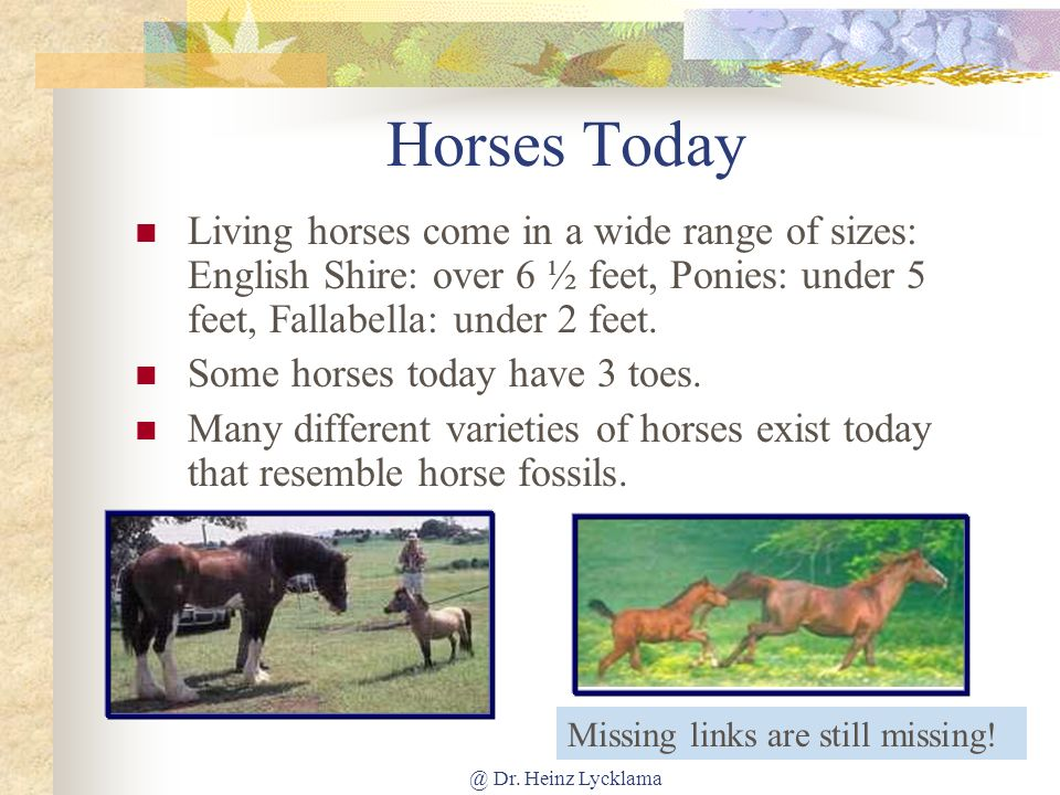 Horses Today Living horses come in a wide range of sizes: English Shire: over 6 ½ feet, Ponies: under 5 feet, Fallabella: under 2 feet.