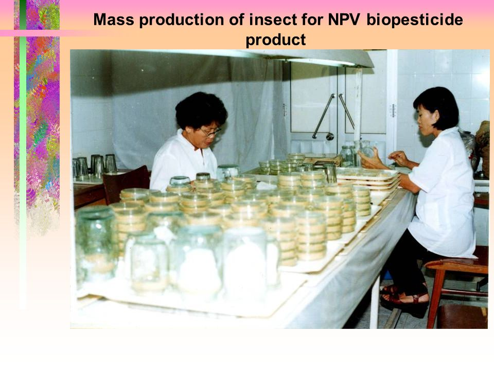 Mass production of insect for NPV biopesticide product