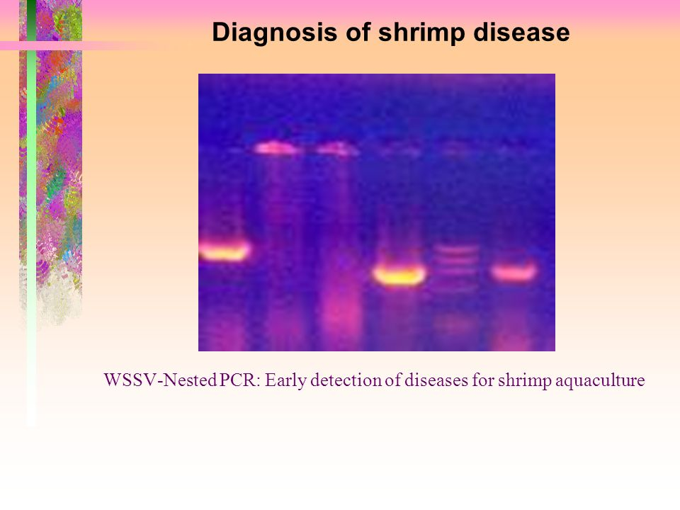 Diagnosis of shrimp disease