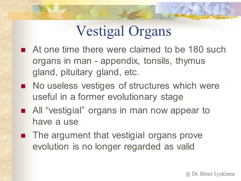 Vestigal Organs At one time there were claimed to be 180 such organs in man - appendix, tonsils, thymus gland, pituitary gland, etc.