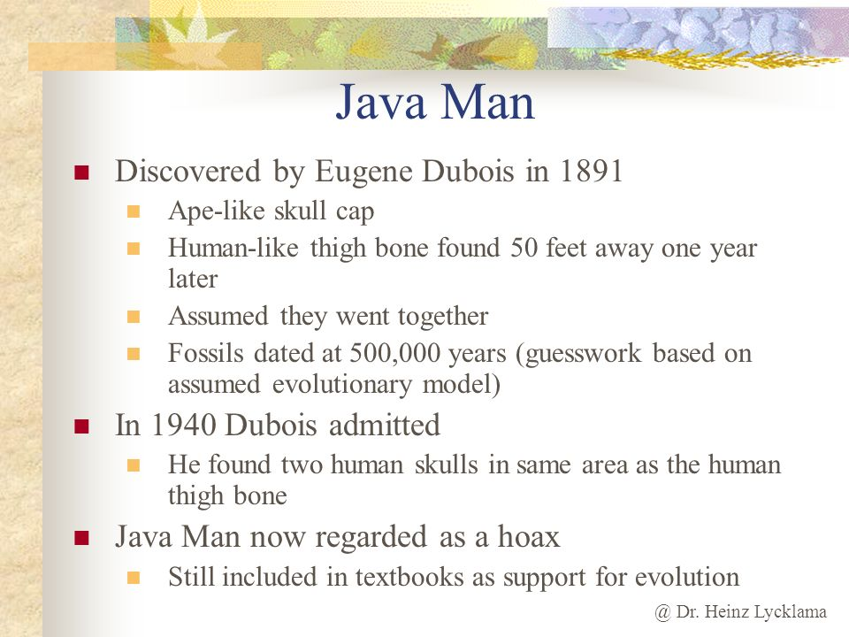 Java Man Discovered by Eugene Dubois in 1891 In 1940 Dubois admitted