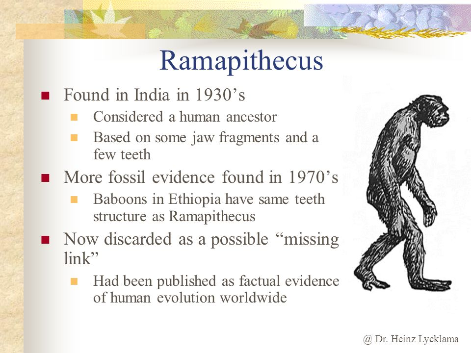 Ramapithecus Found in India in 1930's