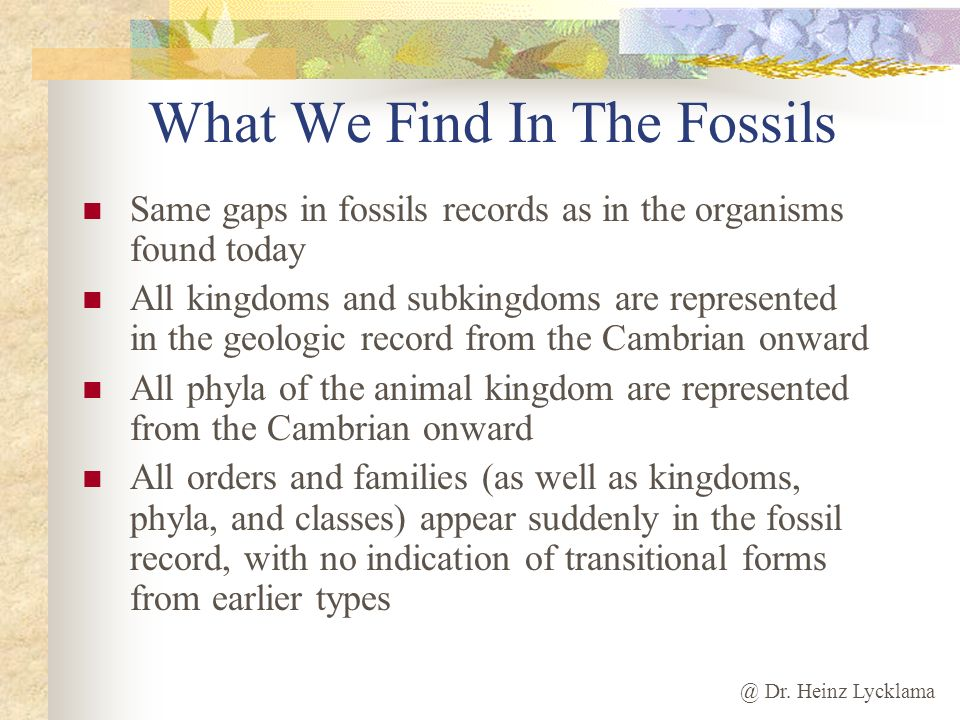 What We Find In The Fossils