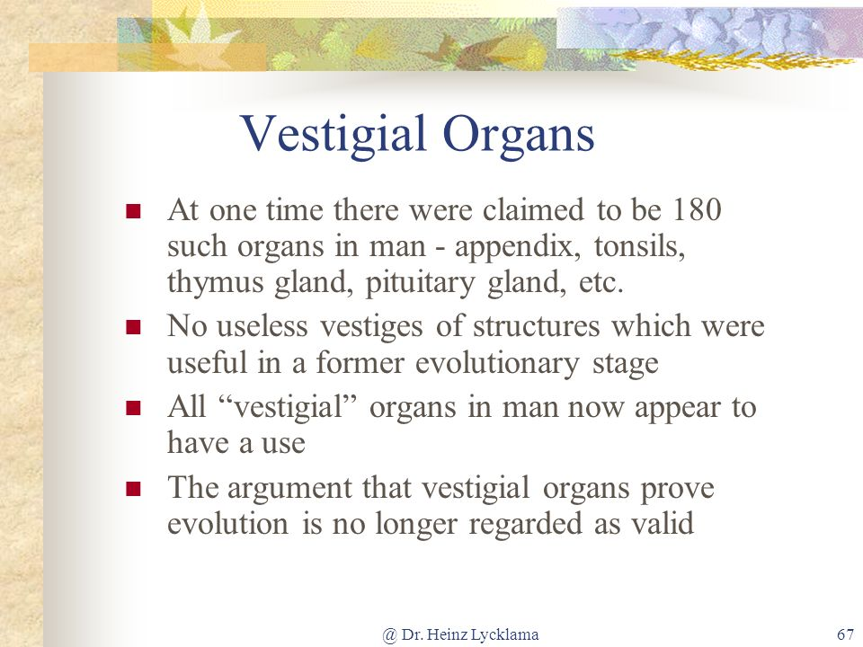 Vestigial Organs At one time there were claimed to be 180 such organs in man - appendix, tonsils, thymus gland, pituitary gland, etc.