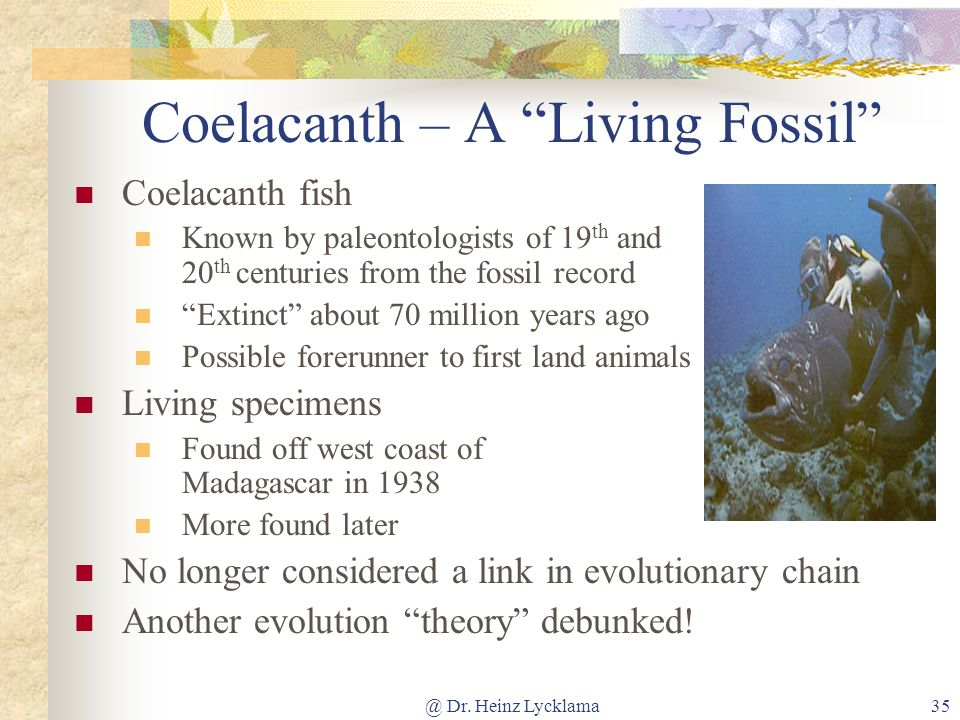 Coelacanth – A Living Fossil