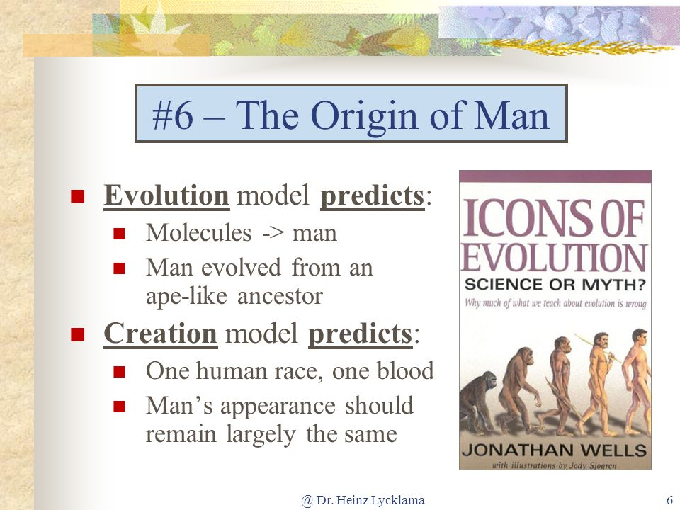 #6 – The Origin of Man Evolution model predicts: