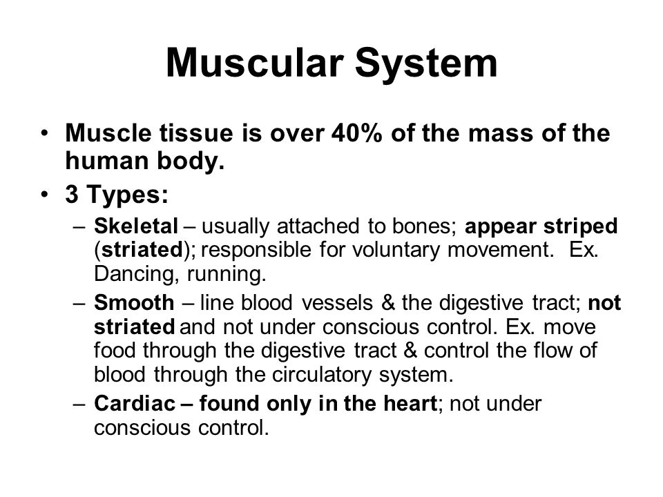the muscular system skeletal muscle tissue About half of your body's weight is muscle in the muscular system, muscle tissue is categorized into three distinct types: skeletal, cardiac, and smooth each type of muscle tissue in the human body has a unique structure and a specific role skeletal muscle moves bones and other structures cardiac muscle contracts the.