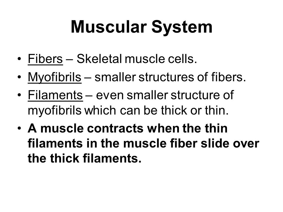 physio ex exercise the muscular system skeletal muscle On text chapter 9, 10 lab 6: module 6 physioex skeletal muscle physiology in   digestive system 4/11 4/16 6 text: chap 22 exam 5lab: physio-ex, exercise.