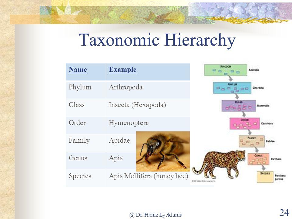 Taxonomic Hierarchy Name Example Phylum Arthropoda Class